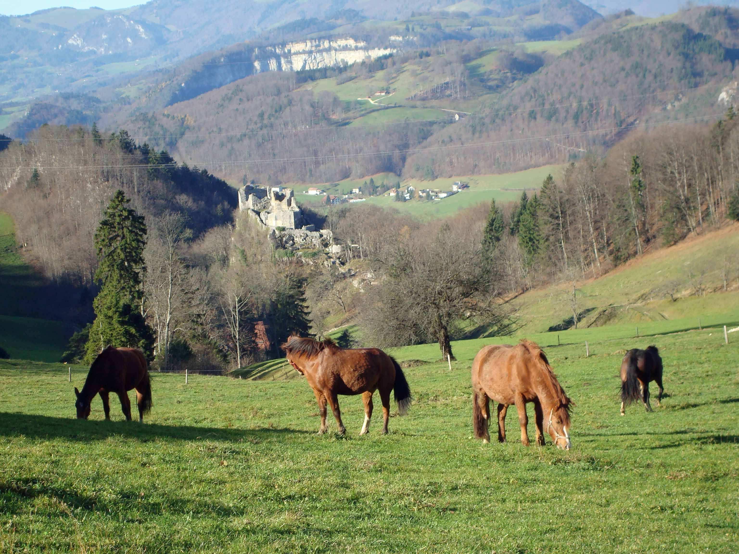 Auf der Stelli, gegen die Ruine Bechburg, im Hintergrund Klus bei Mümliswil