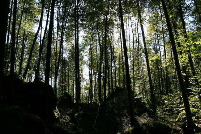 Schlosswald (Sennwald SG) von der Homepage der Gemeinde