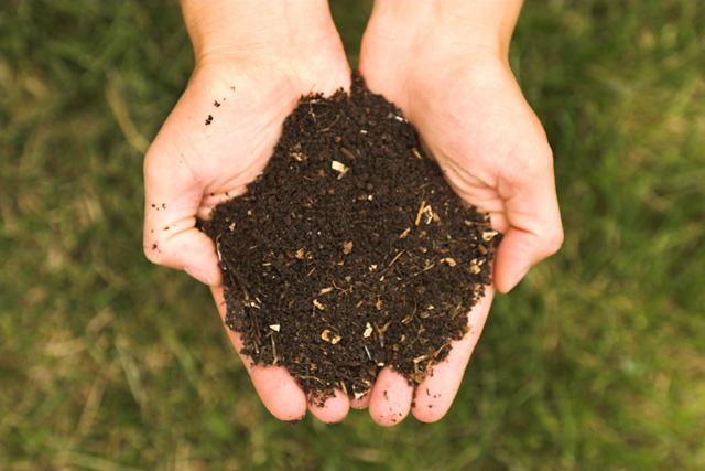 eine Handvoll Kompost