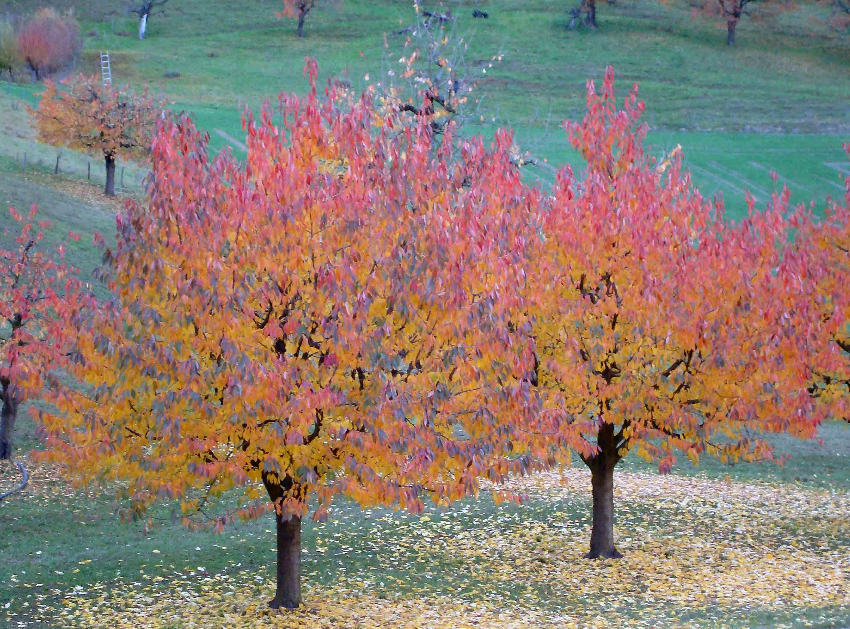 Gold unter den Bäumen