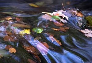 Blaetter im Fluss
