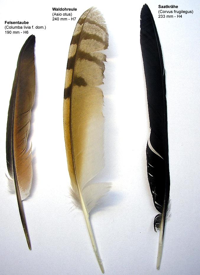 Die drei Federn – eine Betrachtung  Willkommen bei der